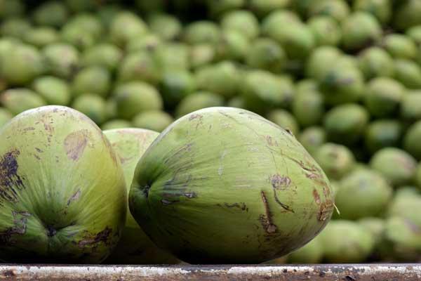 Brothers International Coconut
